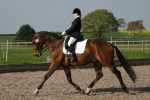 Cockshot Affiliated Dressage